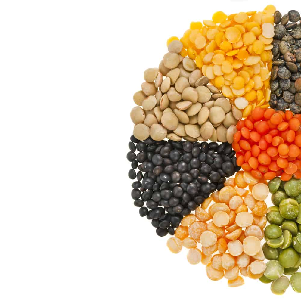 Can Dogs Eat Beans? Which Beans Are Not Safe for Dogs? 1