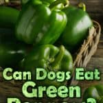 Can Dogs Eat Green Peppers? What Are the Health Benefits of Bell Peppers to Dogs?