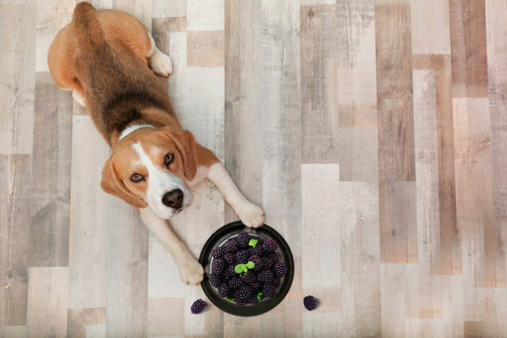 Can Dogs Eat Blackberries? Are Blackberries Toxic to Dogs? 5