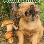 Can Dogs Eat Mushrooms? Which Mushrooms Are Toxic to Dogs?