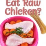 Can Dogs Eat Raw Chicken? What Are the Health Risks Involved?