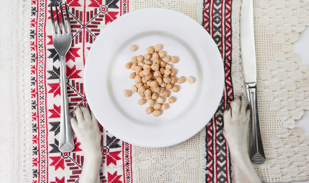 Can Dogs Eat Chickpeas? Are Chickpeas Safe for Dogs? 2