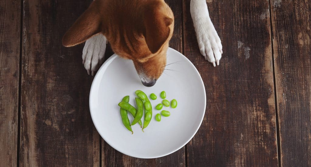 Can Dogs Eat Edamame? What Are the Health Benefits of Edamame for Dogs? 1