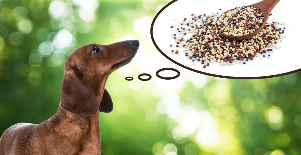 Can Dogs Eat Quinoa? What Are the Health Benefits of Quinoa for Dogs? 2