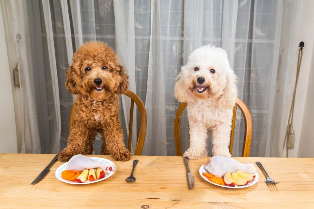 Can Dogs Eat Raw Chicken? What Are the Health Risks Involved? 4