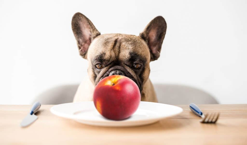 Nectarines Are Just As Peachy As Peaches, Can Dogs Eat Nectarines? 2