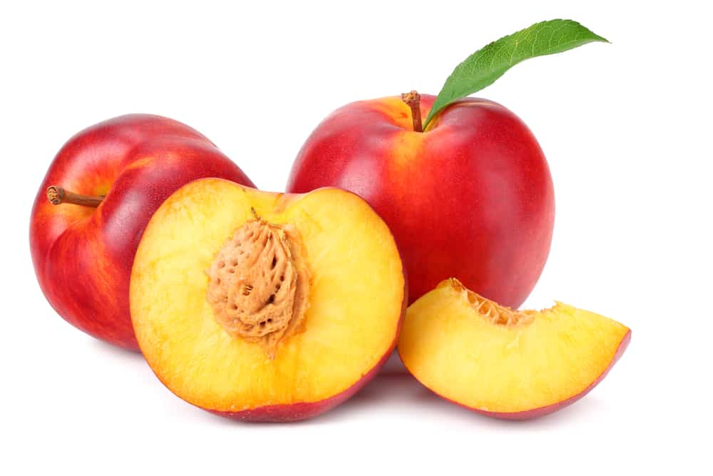 Nectarines Are Just As Peachy As Peaches, Can Dogs Eat Nectarines? 1