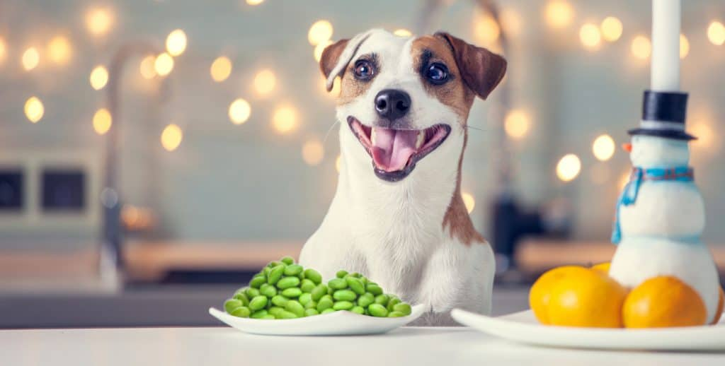Can Dogs Eat Edamame? What Are the Health Benefits of Edamame for Dogs? 3