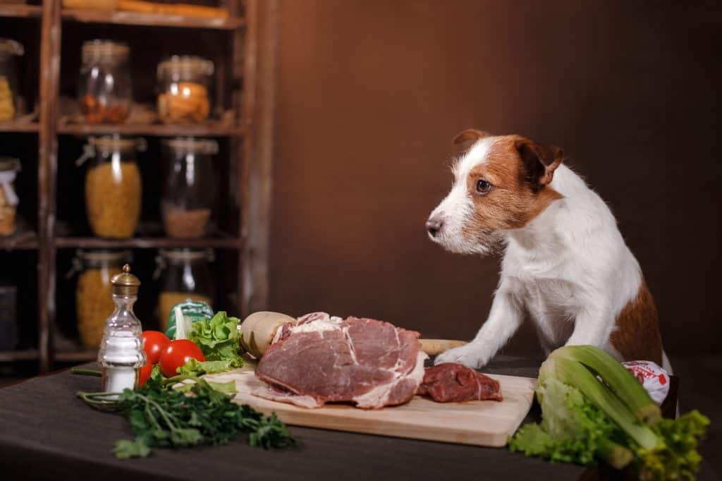 Can Dogs Eat Pork? When Is Pork Bad for Dogs? 2