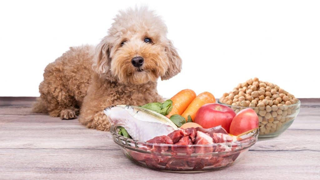 Can Dogs Eat Chickpeas? Are Chickpeas Safe for Dogs? 1