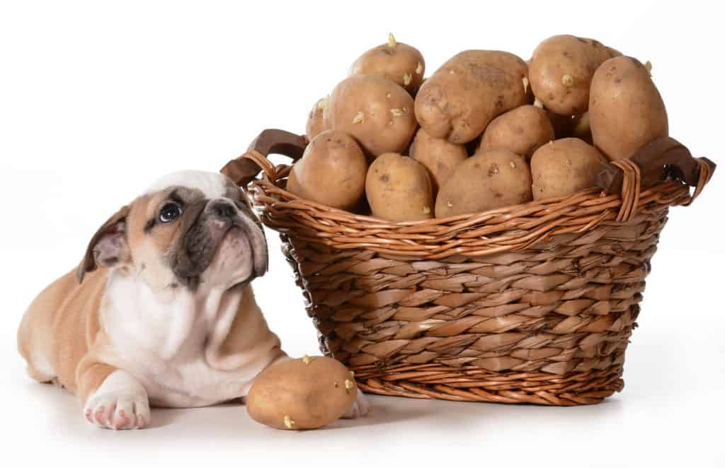 Everyone (Including Dogs) Loves Potatoes, Can Dogs Eat Potatoes? 4