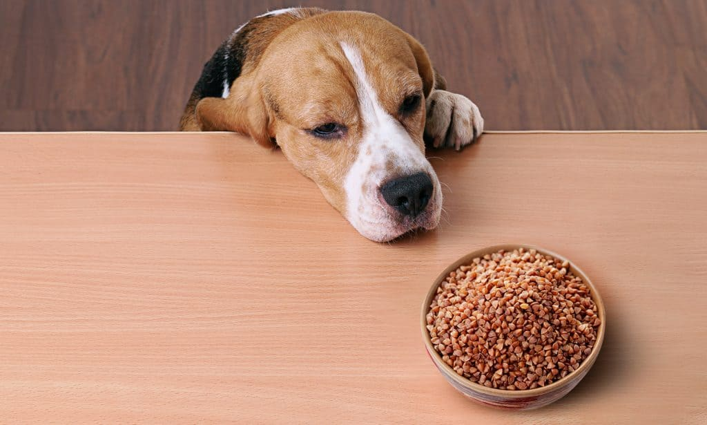 Can Dogs Eat Quinoa? What Are the Health Benefits of Quinoa for Dogs? 3