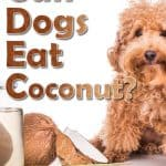 Can Dogs Eat Coconut? What Are the Health Benefits of Coconut to Your Dog?