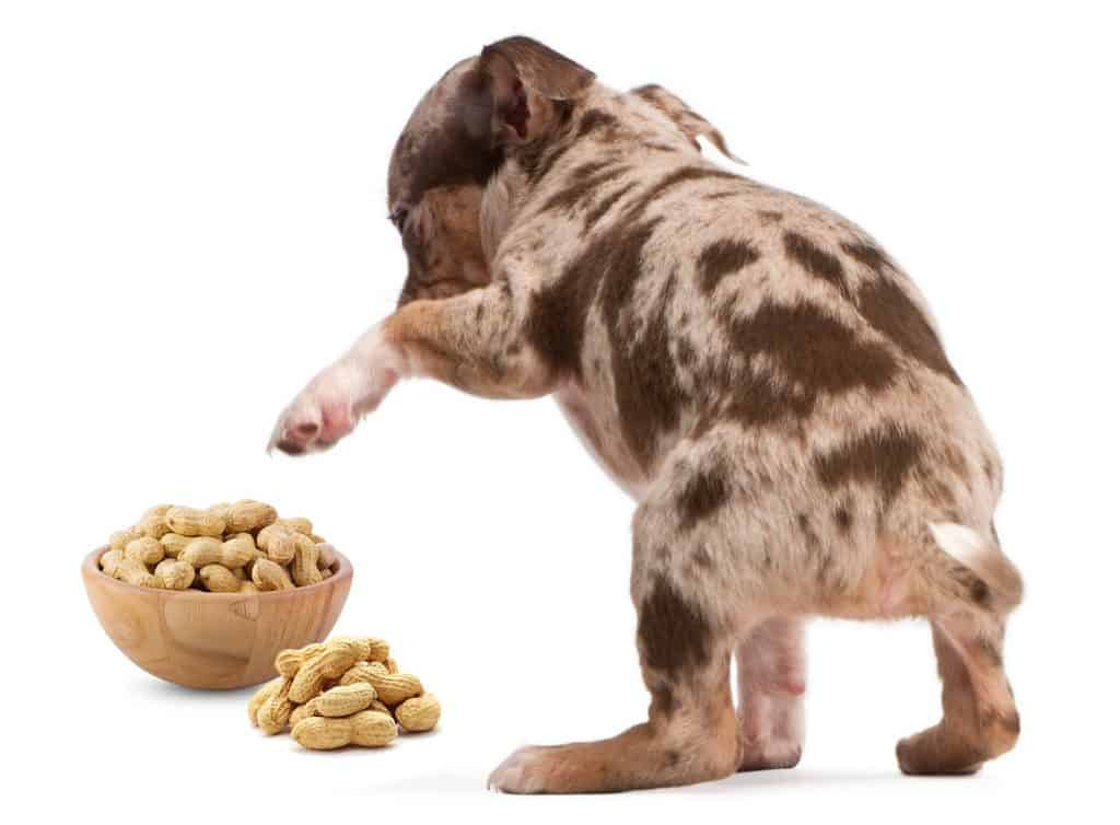 It Ain't Nut-thin' But A Peanut, Can Dogs Eat Peanuts? 4