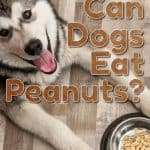 It Ain't Nut-thin' But A Peanut, Can Dogs Eat Peanuts?