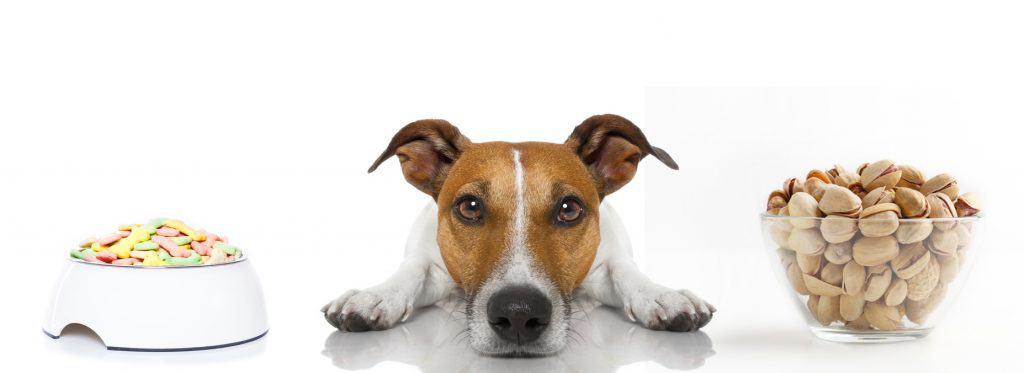 Can Dogs Eat Pistachios? What Happens If Your Dog Eats Pistachios? 2