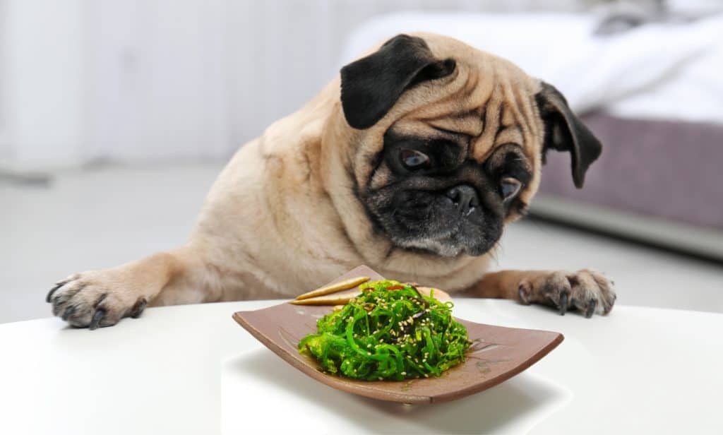 Can Dogs Eat Seaweed? Can Dogs Eat Wild Seaweed? 1