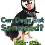 Can Dogs Eat Seaweed? Can Dogs Eat Wild Seaweed?