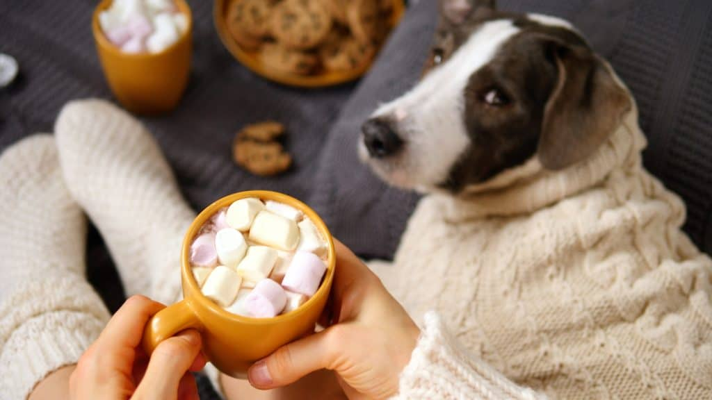 Can Dogs Eat Marshmallows? What to Do If Your Dog Eats Marshmallows? 3