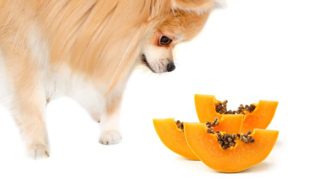 It's A Nutrient-Dense Tropical Fruit, Can Dogs Eat Papaya? 3
