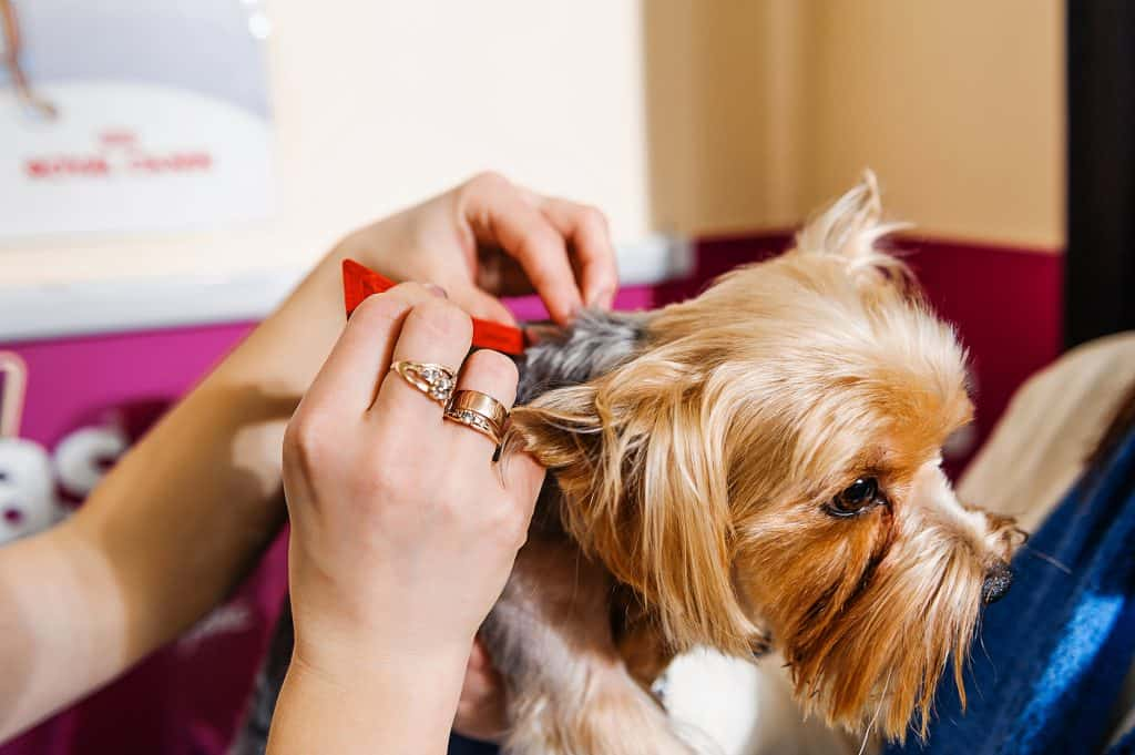 Can Dogs Get Lice? How Can You Identify If Your Dog Has Lice? 1