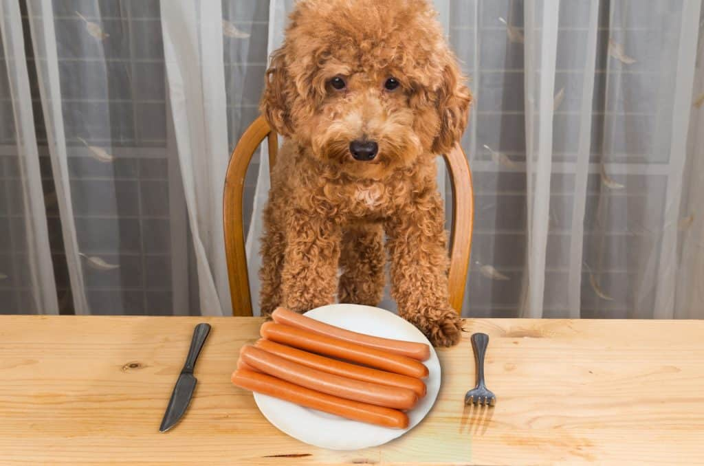 They're Not Healthy, But They Sure Are Yummy, Can Dogs Eat Hot Dogs? 2