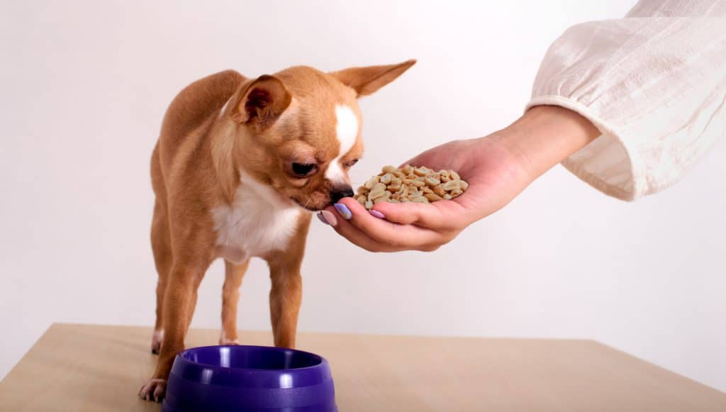 It Ain't Nut-thin' But A Peanut, Can Dogs Eat Peanuts? 3