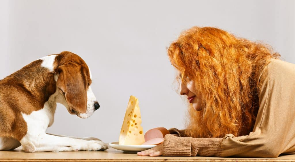 Can Dogs Eat Cheese? Which Types of Cheese Can Dogs Eat? 1