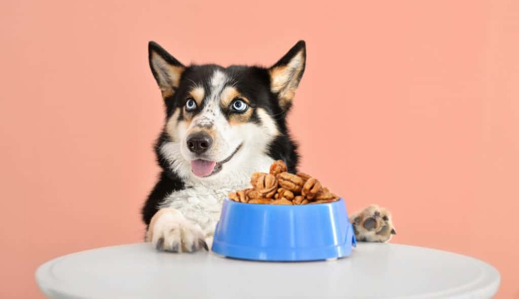 Can Dogs Eat Pecans? What Happens If Your Dog Eats Pecans? 1