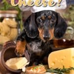 Can Dogs Eat Cheese? Which Types of Cheese Can Dogs Eat?