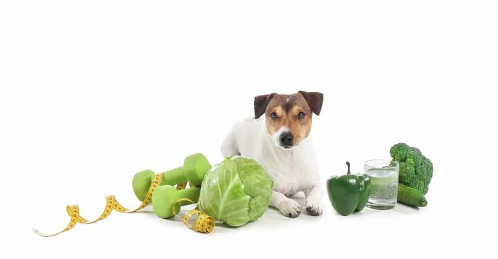 Can Dogs Eat Cabbage? Health Benefits of Cabbage for Dogs 1