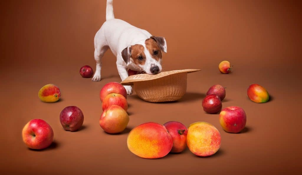 Can Dogs Eat Mango? Is It Safe for Dogs to Eat Mangoes? 2