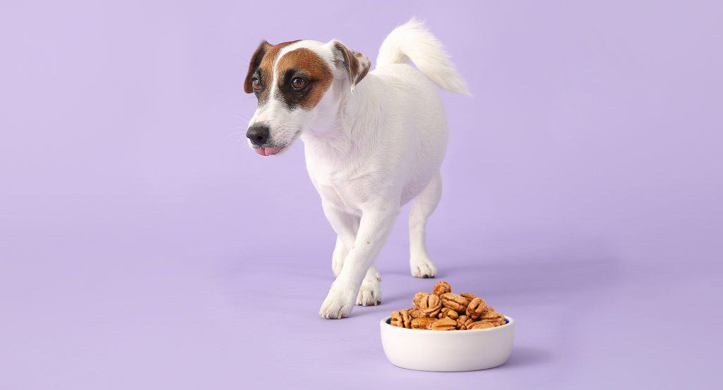 Can Dogs Eat Pecans? What Happens If Your Dog Eats Pecans? 4