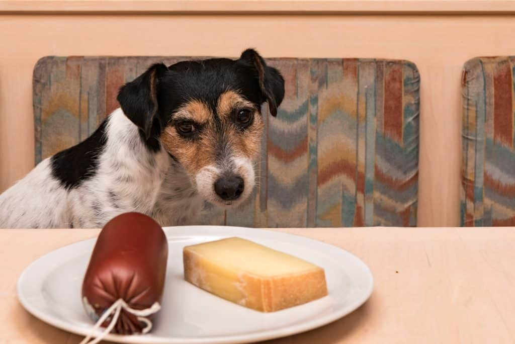 Can Dogs Eat Cheese? Which Types of Cheese Can Dogs Eat? 3