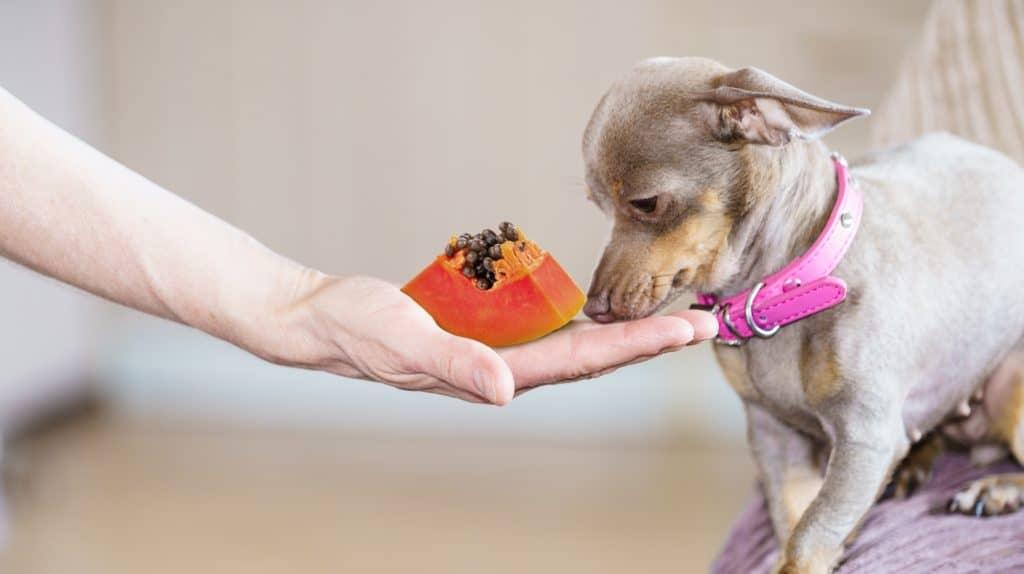 It's A Nutrient-Dense Tropical Fruit, Can Dogs Eat Papaya? 2