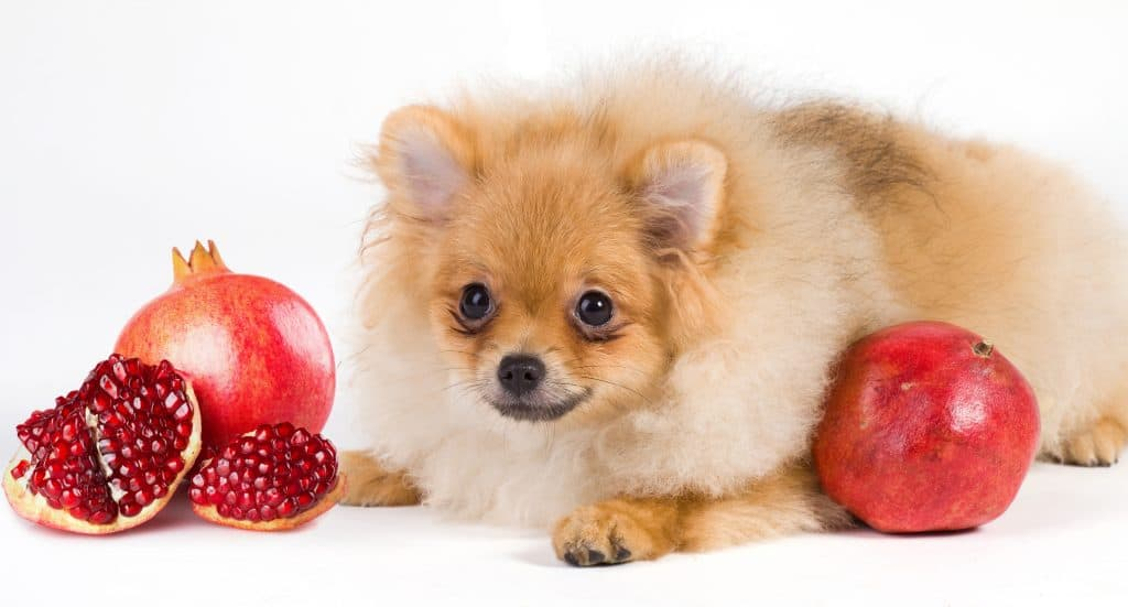Can Dogs Eat Pomegranate? What Should You Do If Your Dog Has Eaten Pomegranate? 1