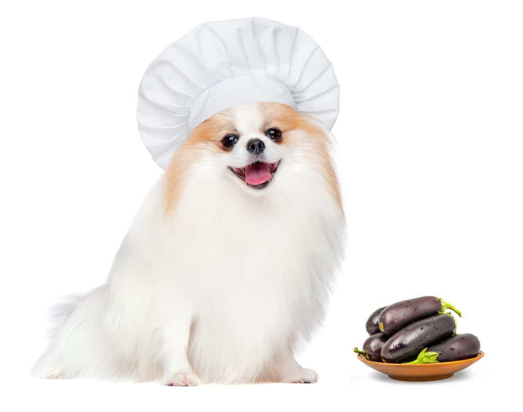 Can Dogs Eat Eggplant