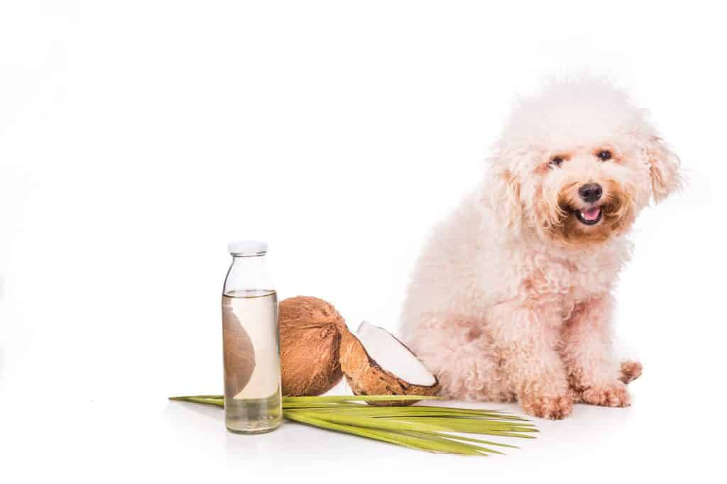 Can Dogs Eat Coconut? What Are the Health Benefits of Coconut to Your Dog? 3