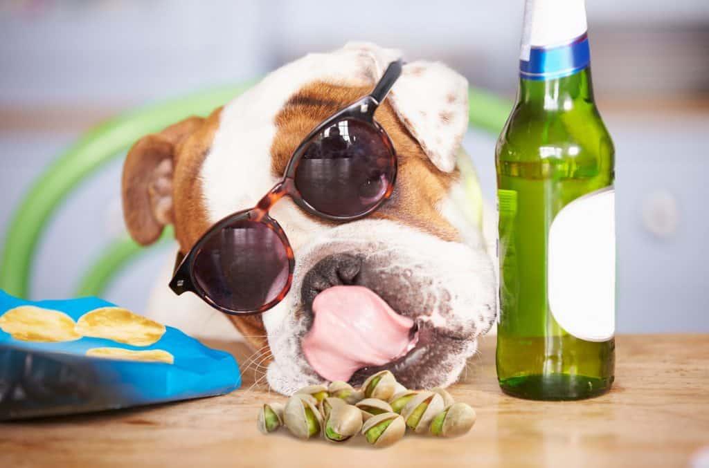 Can Dogs Eat Pistachios? What Happens If Your Dog Eats Pistachios? 4