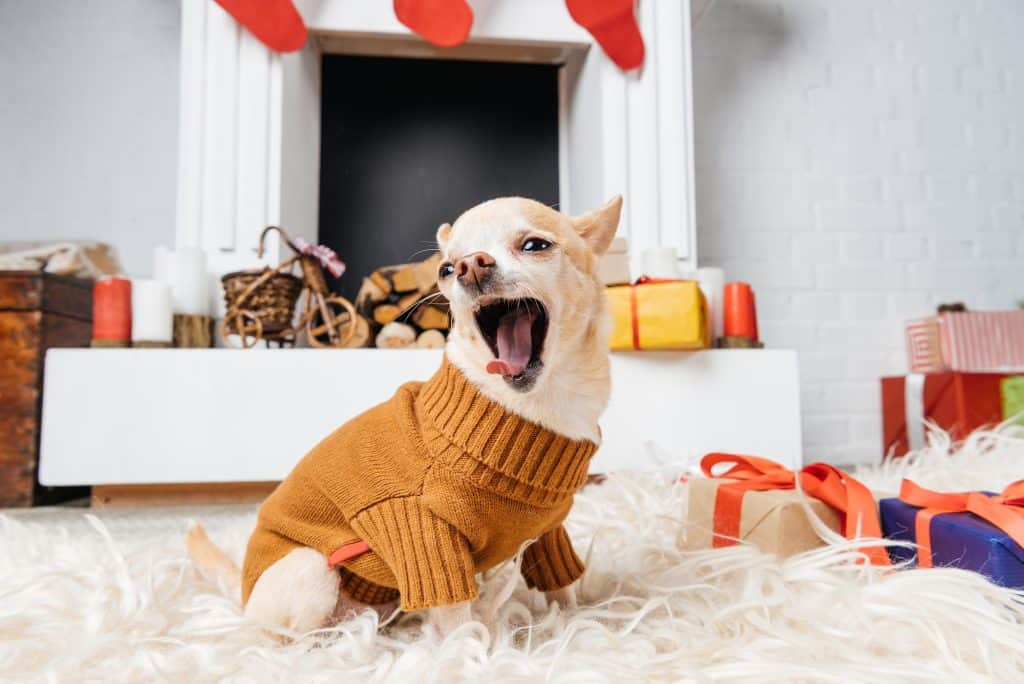 What's the Best Dog Food for Bad Breath? What to Look For When Choosing a Dental Health Food for Your Dog? 25