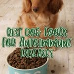 Best Dog Food for Autoimmune Disease – [year] Buying Guide and Frequently Asked Questions