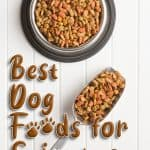 Best Dog Food for Seizures: Help Prevent Seizures with the Right Diet