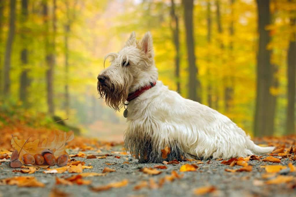 Can Dogs Eat Acorns? What Happens If Your Dog Has Eaten an Acorn? 2