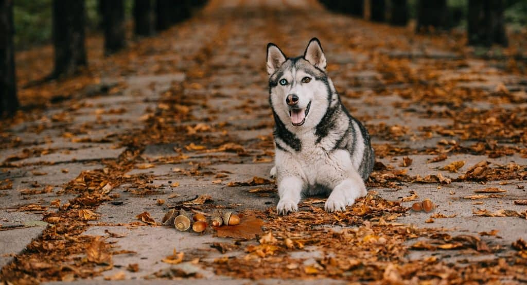 Can Dogs Eat Acorns? What Happens If Your Dog Has Eaten an Acorn? 3