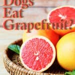 Can Dogs Eat Grapefruit? What Should You Do If Your Dog Ate Grapefruit?
