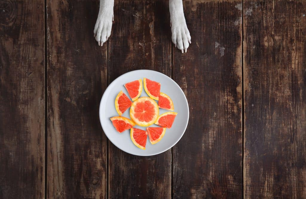Can Dogs Eat Grapefruit? What Should You Do If Your Dog Ate Grapefruit? 2