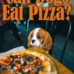 Can Dogs Eat Pizza? Are All Types Of Pizzas Bad For Dogs?