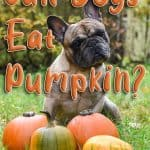 Can Dogs Eat Pumpkin? What Are the Benefits of Pumpkin to Your Dog's Health?