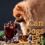 Can Dogs Eat Cinnamon? What Happens If Your Dog Eats Too Much Cinnamon?