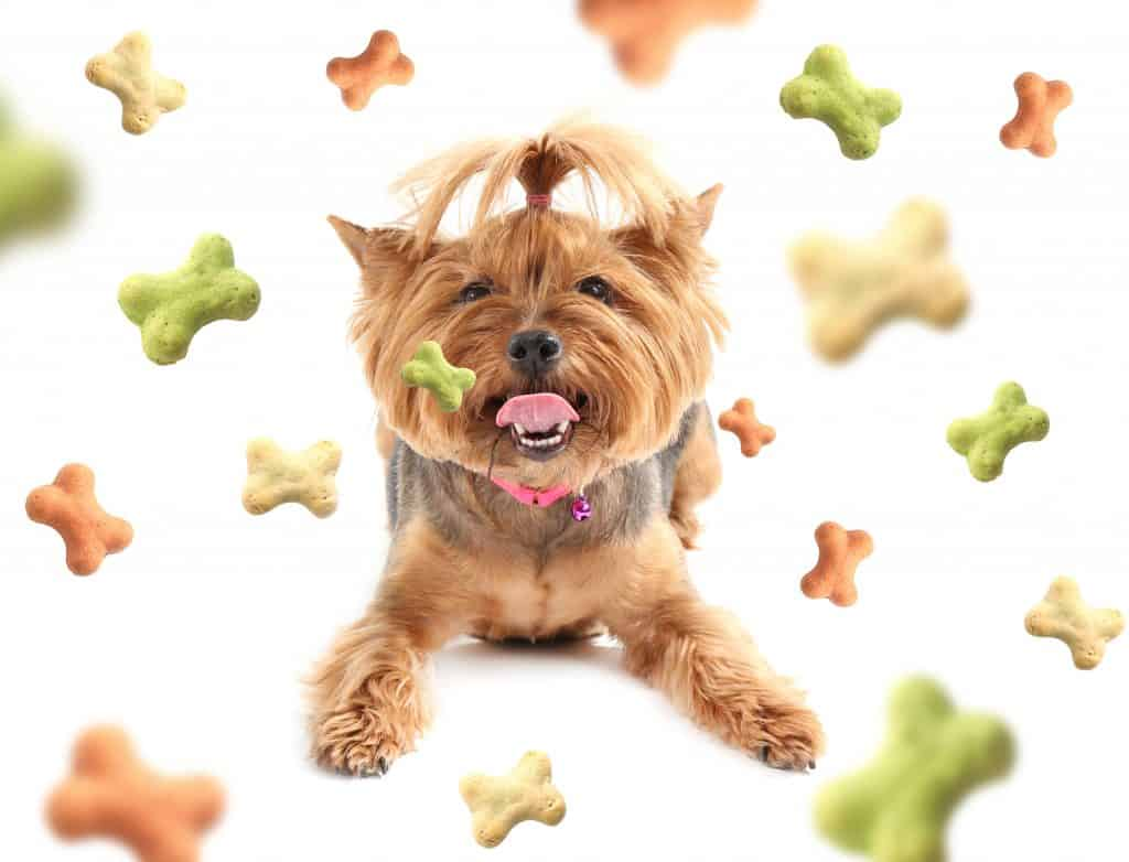 [year] Best Salmon Dog Food Brands: A Healthy Choice for Sensitive Dogs 42